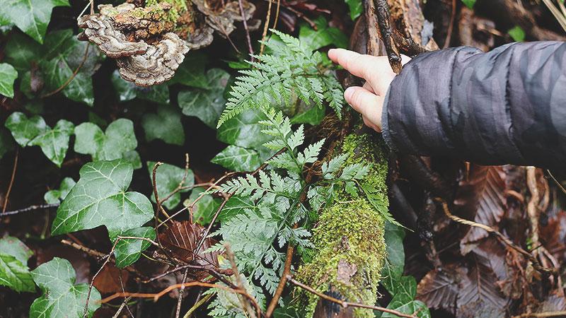 Carnet album artisanal herbier