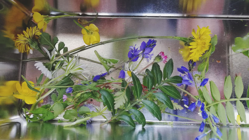 Carnet album artisanal herbier 02